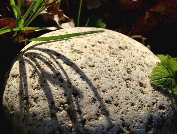 Herbe et granit
