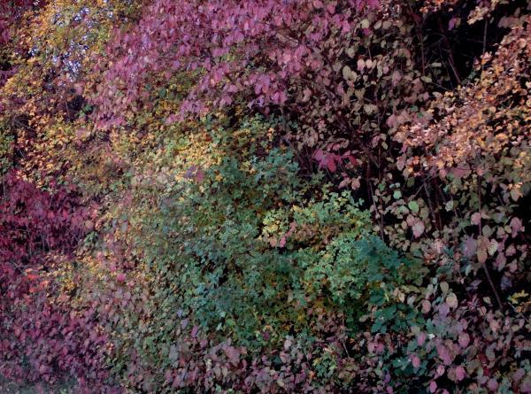 Monet en automne