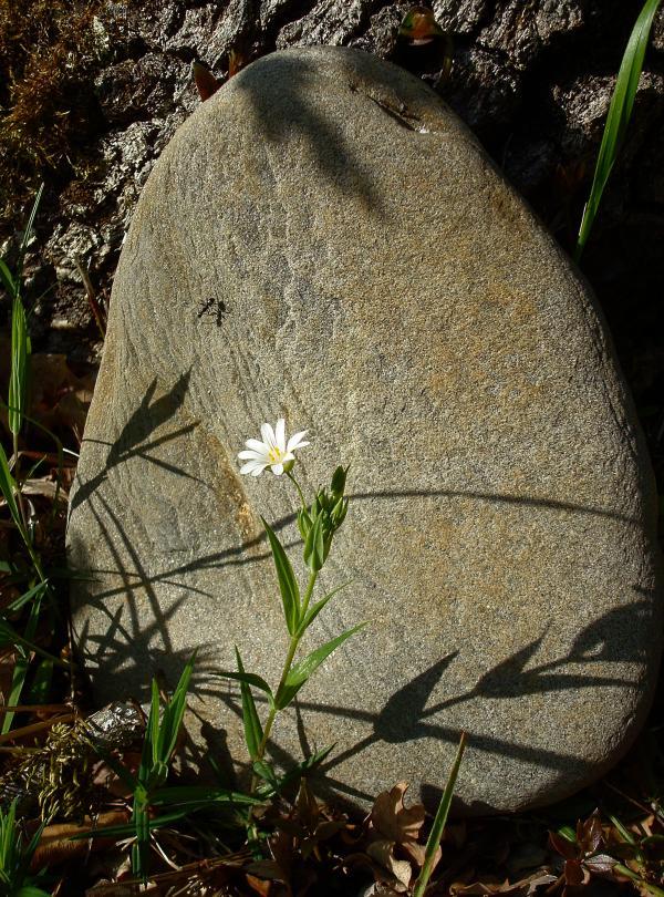 La fleur, la fourmi, la pierre