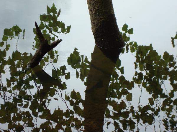 Miroir aux feuilles