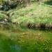 La source aux grenouilles
