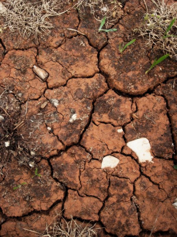 Terre du causse