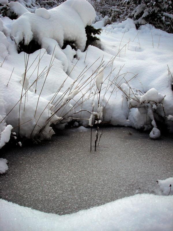 Trou d'eau gelé