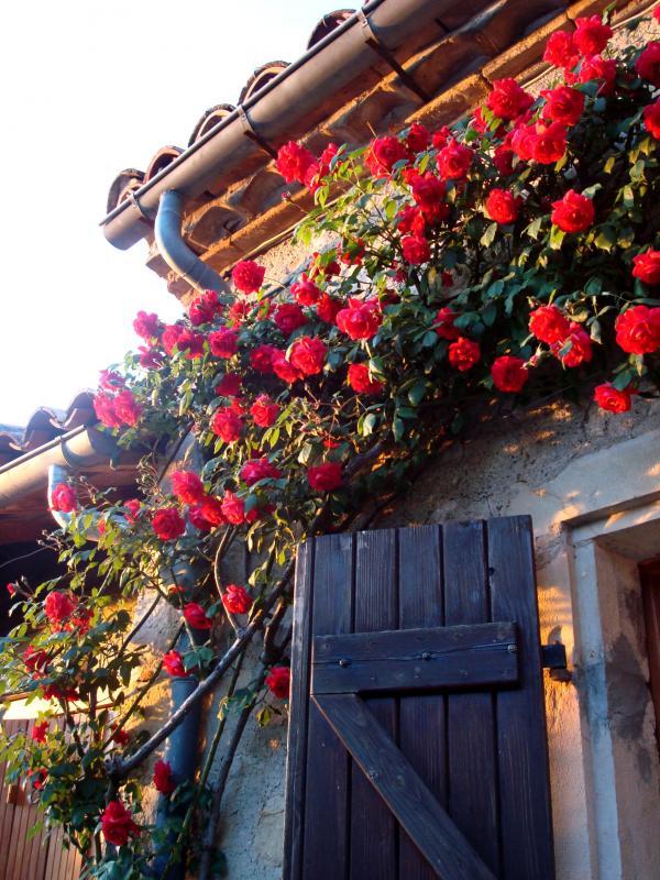 Coucher de roses à Puycelsi