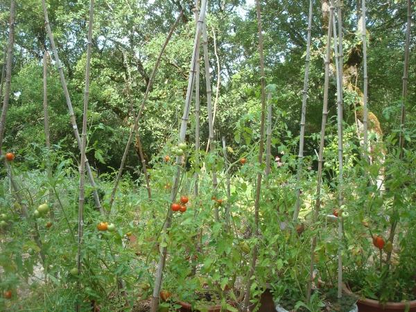 Clan des tomates