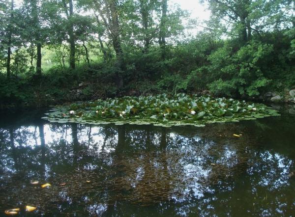 Lac aux nénuphars