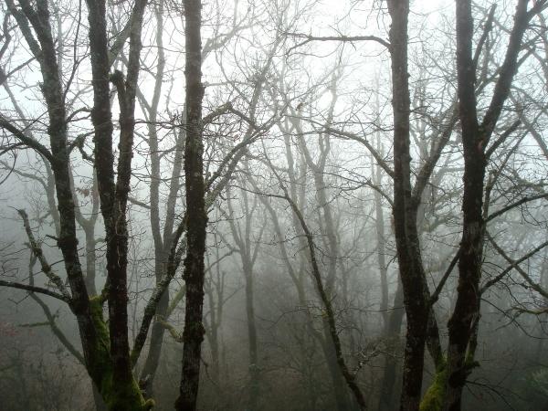 Se blottir dans le brouillard