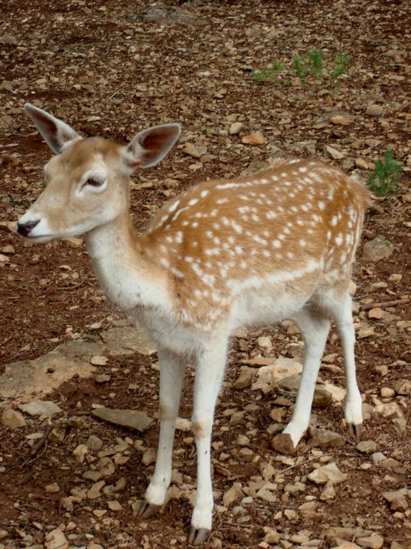 Tous les faons ne s'appelle pas Bambi...