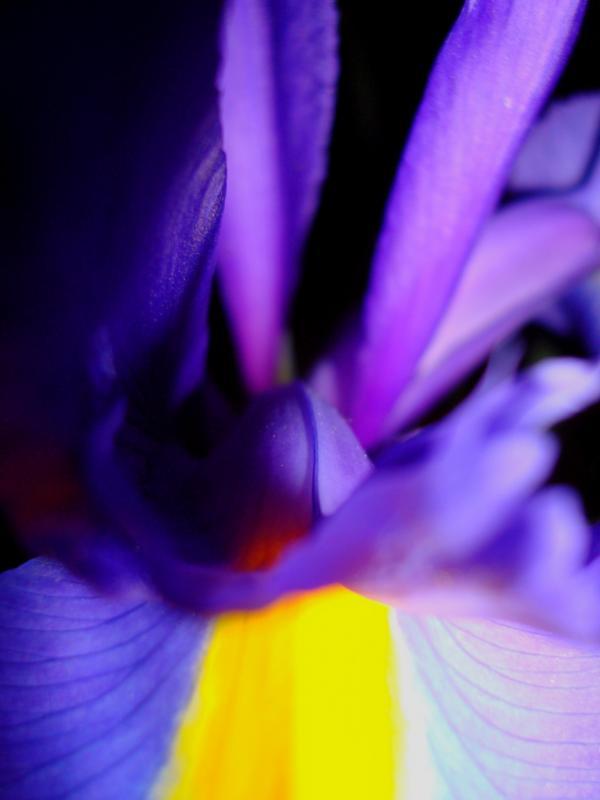 Au fond de l'Iris
