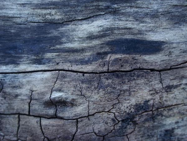 Planète vieille souche