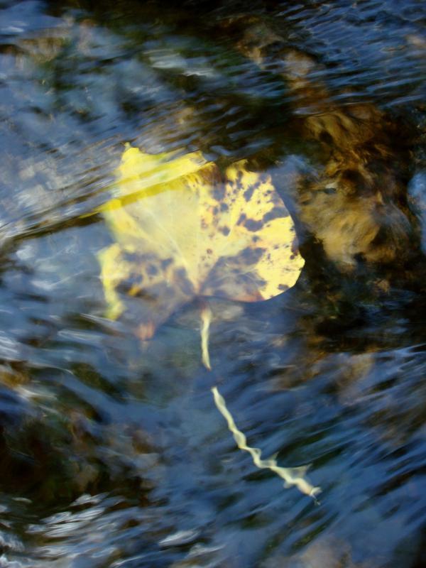 Sous un voile d'eau
