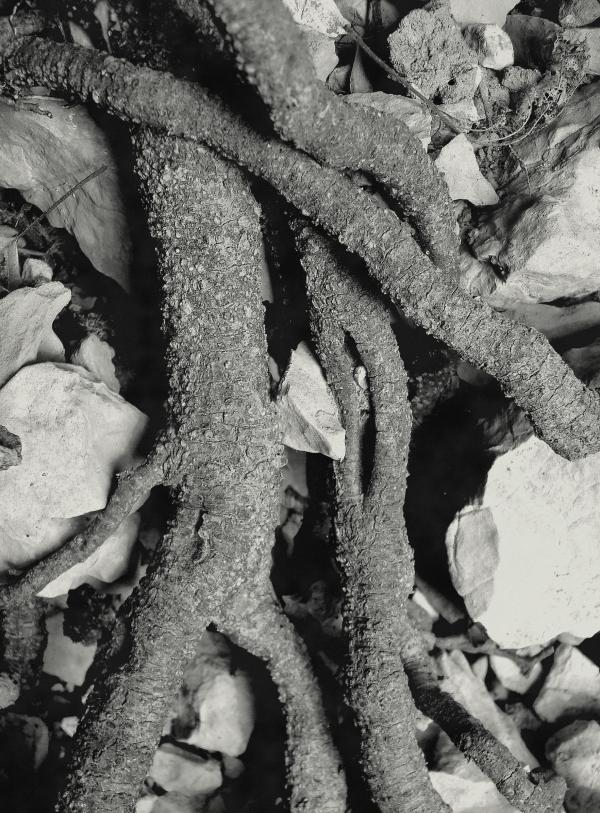 Nos vieilles racines entremêlées