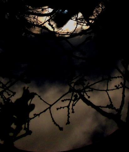 A l'oeil de de la nuit