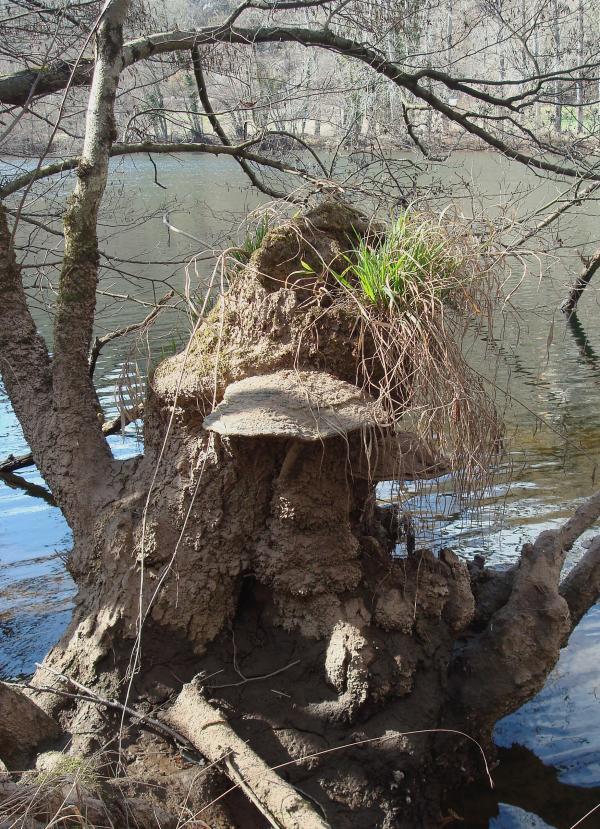 Une maison au bord de l'eau