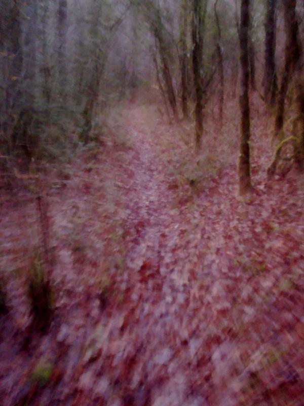 Promenant dans les bois I
