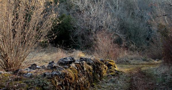 Chemin des noisetiers