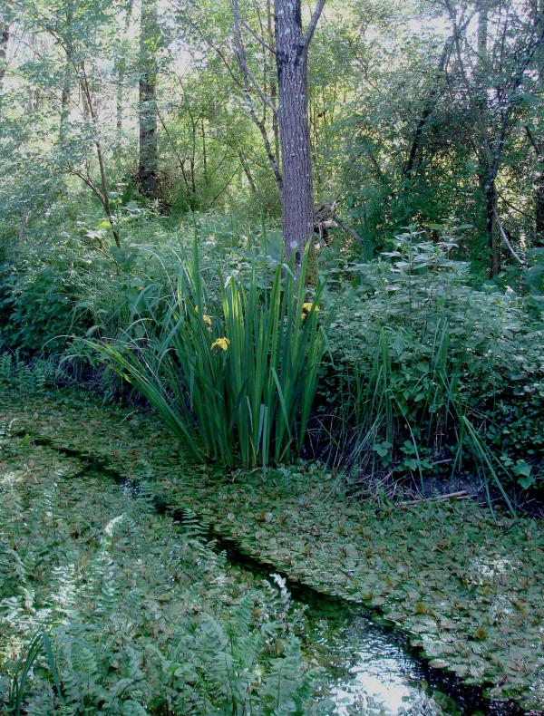 Ruisseau de Bonnefont