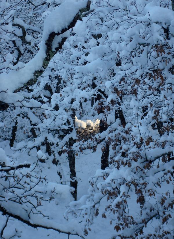 Un nid de lumière