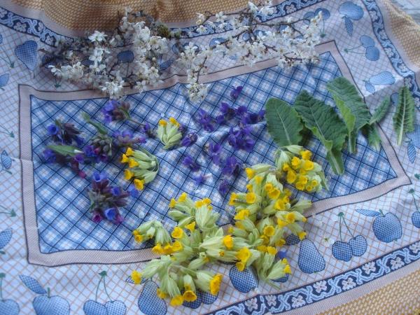Cueillette de fleurs de coucous, violettes, prunellier, pulmonaires