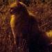 Une soirée entre chats à Boudes - Puy de Dôme