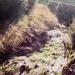 Esprit du ruisseau