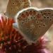 Azurés commun sur échinacéa