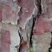 Écorce de Broceliande