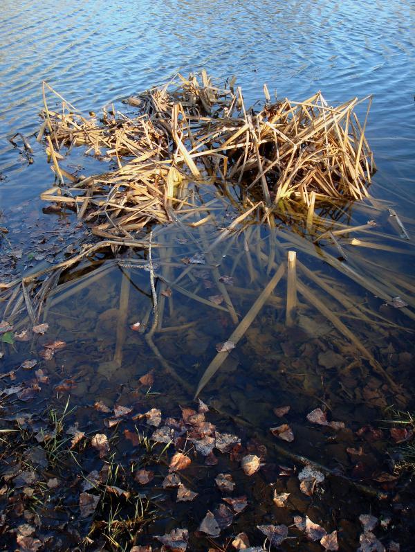 En surface - Lac de Nougayrac