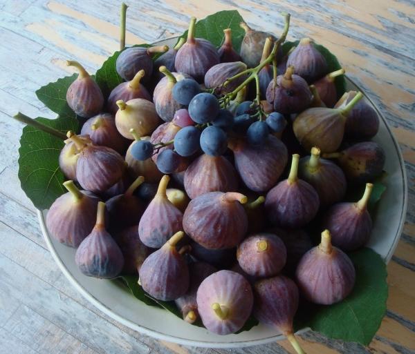 Cueillette plus figues que raisins