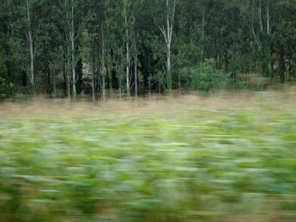 Les arbres n'entrent pas dans la course