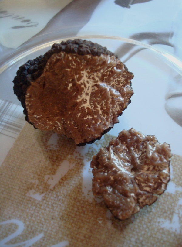 Joie du jardinage, belle truffe noire du 28 juin !