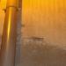 Les geckos de La Palme