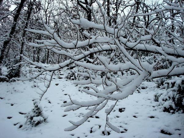Pure neige