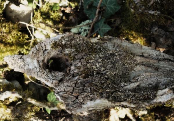 Petit dauphin des bois