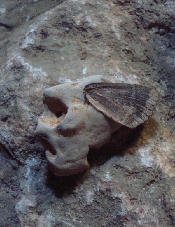 Crâne volant