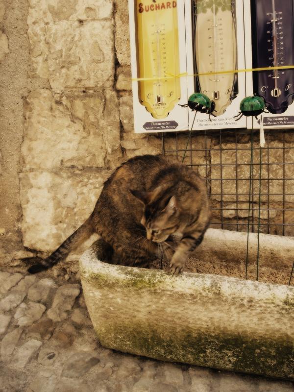 Chat de Rocamadour