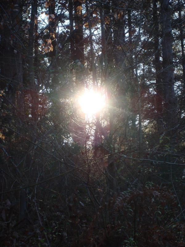 Le soleil dans sa toile