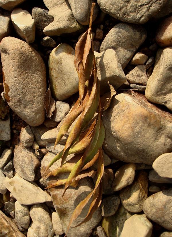 Flammes feuilles