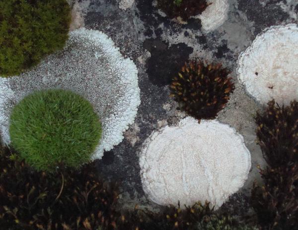 Tapis mousse et lichens