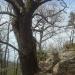 Grimpette au-dessus de la Couze Pavin - Auvergne