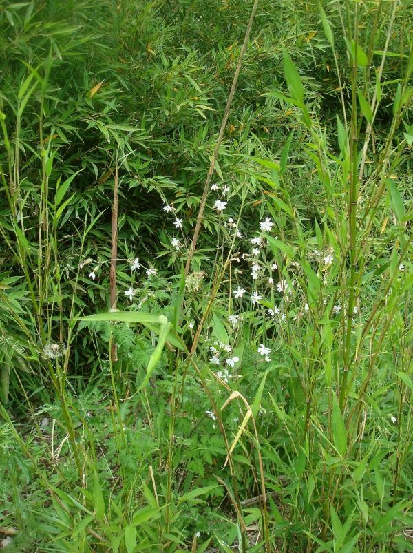 Compagnons blancs dans la brousse