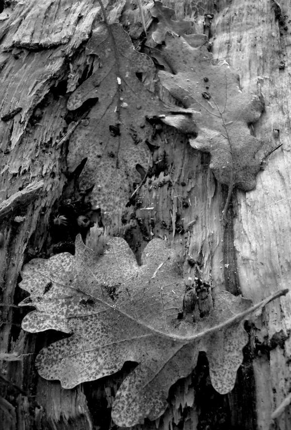 Mortes feuilles