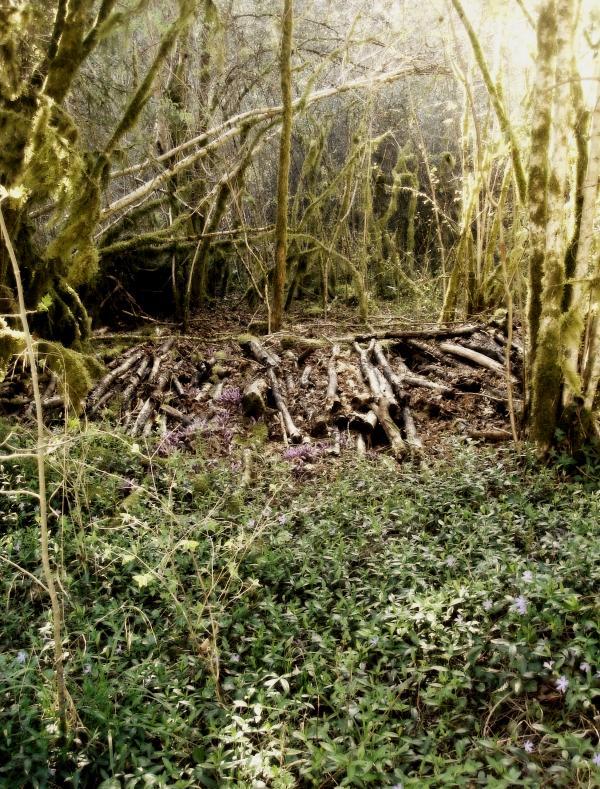 Dans la forêt...