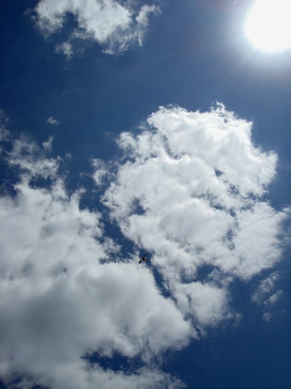 Condor in the sky