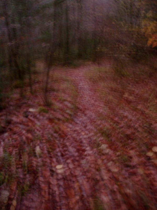 Promenant dans les bois III