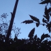 Jardins suspendus en nocturne
