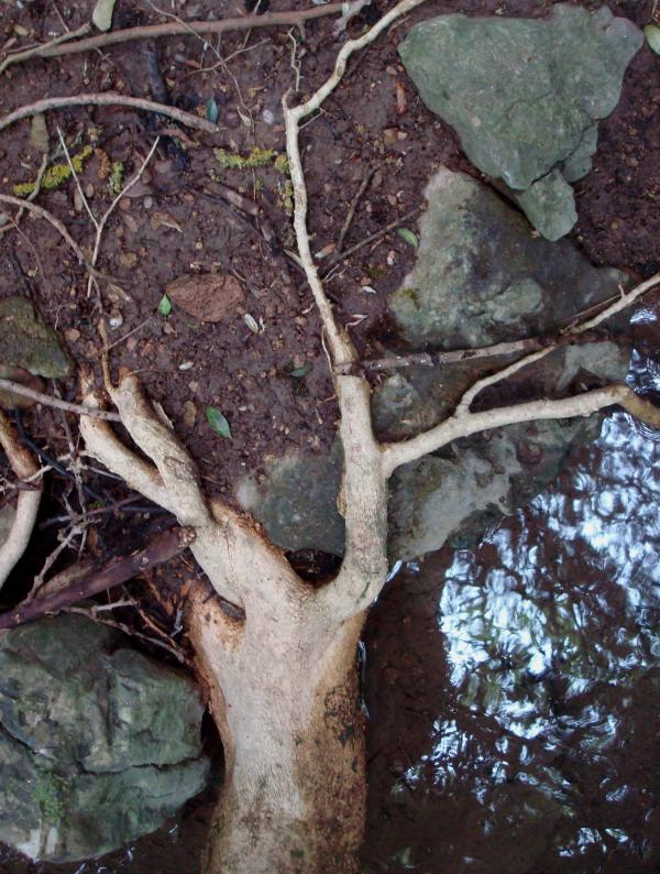 Le repos des racines