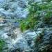 Joyeuse la source quand elle va à la rivière