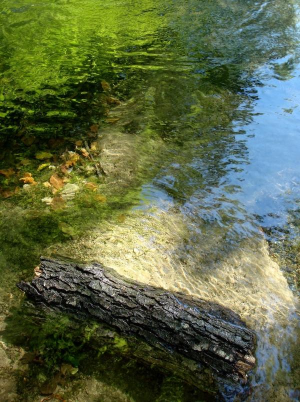 L'eau, le ciel, les arbres