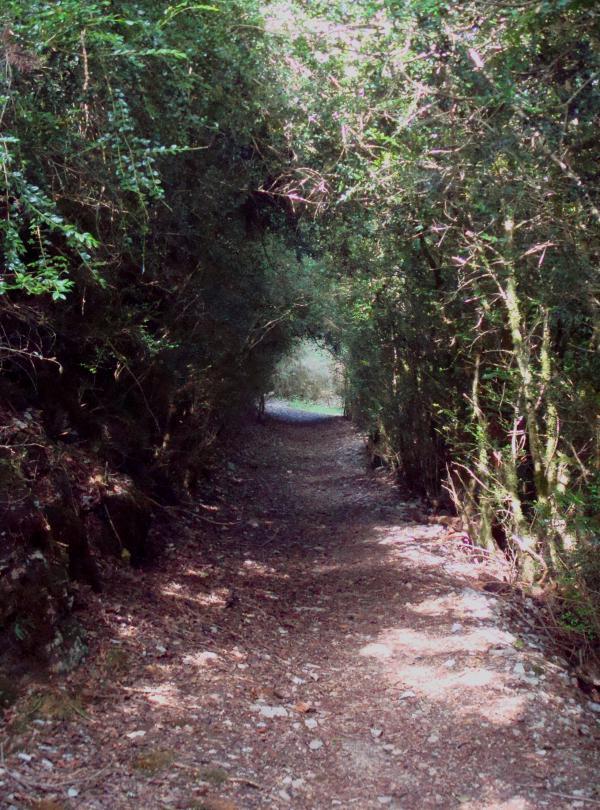 Tunnel de buis